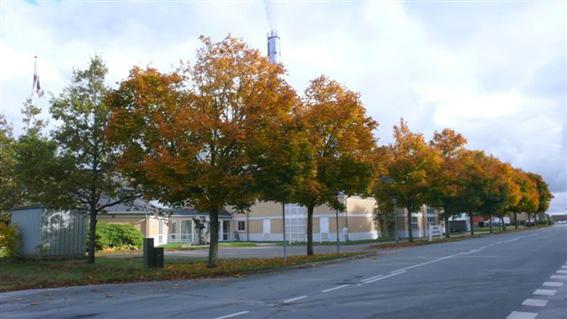 Sindal. Baggesvognvej 32 v. Sindal Varmeforsyning. Løn (Acer platanoides). s